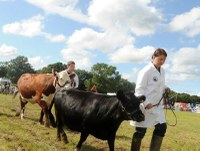 Cranleigh Show next for MJ Abbott's sales team