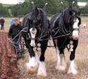 Visit MJ Abbott at the British National Ploughing Championships