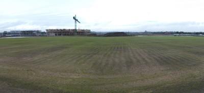 Grass starting to germinate