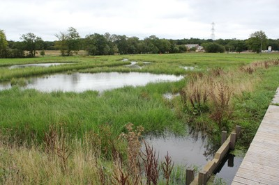 Established wetland and weir