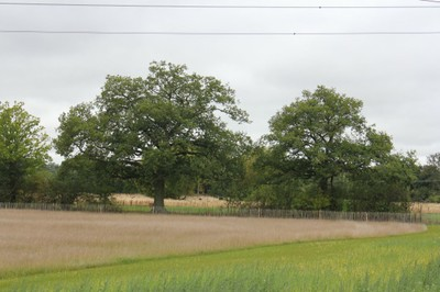 Meadow area
