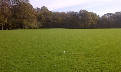 Pitch following initial 3 cuts, on target to be ready for use by September 2013
