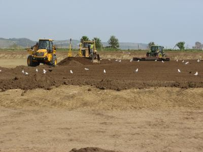 Topsoil re-spread to new pitch