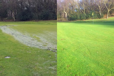16th Green before and after new drainage installed