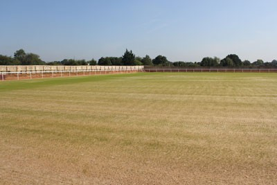 Pitch 1 germination within a week of seeding