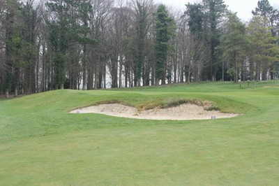 9th greenside bunker following cattle damage