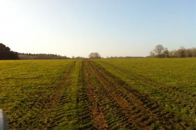 Post mole ploughing